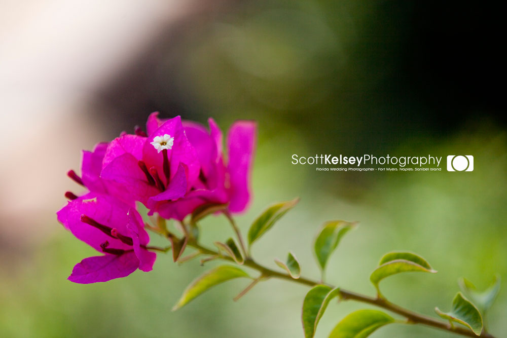 Scott-Kelsey-Photography_2jpg
